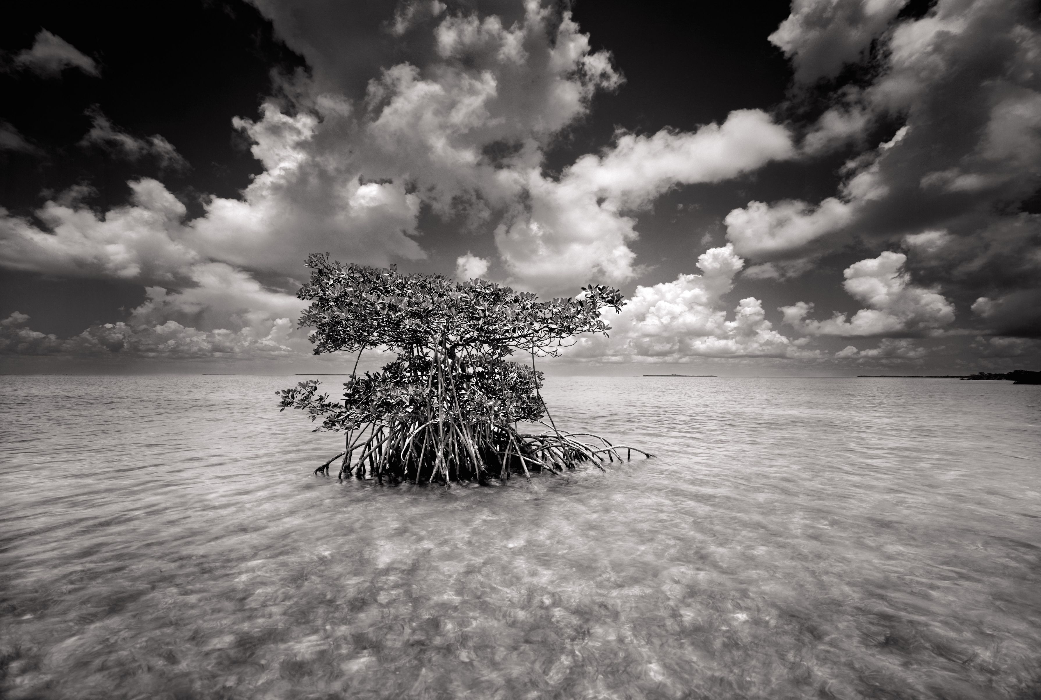 America's Everglades